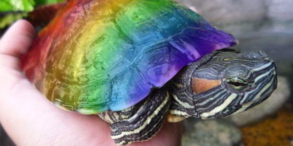 Kaliforniya�da Devlet Okullar�nda LGBT Tarihi ��retilecek